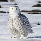 Perfect Plumage by Heather King