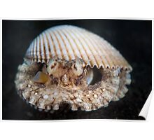 Coconut octopus in white clam shell - Lembeh Strait  Poster