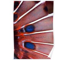 Fish fin abstract  Poster