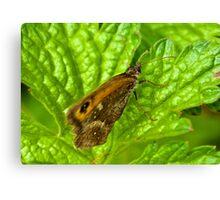 Gatekeeper Butterfly Canvas Print