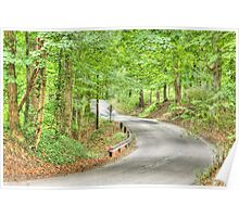 Shaded road near Goethe Link Observatory Poster