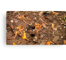 Halloween  black widow spider Canvas Print
