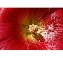 Floral Close Up Photographic Print