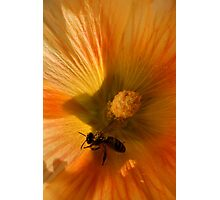 Flower in Close Up Photographic Print