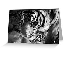 Tiger in black and white Greeting Card