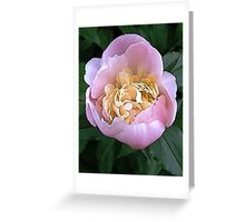 Peony in Pale Pink Greeting Card