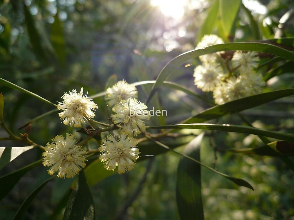 NL8/2010 - Acacia Blossoms 3 by beeden