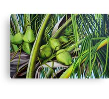 Green Coconuts from the Tropics Canvas Print