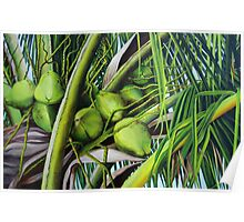 Green Coconuts from the Tropics Poster