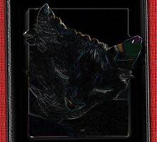 Spooky cat by Carolyn Clark