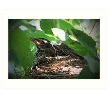 Crowded Nest ~ Baby Robins Art Print