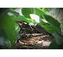 Crowded Nest ~ Baby Robins Photographic Print