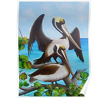 Pelicans on the Beach Poster