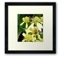 Why can't we BEE friends? Framed Print