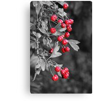 Berry Power Canvas Print