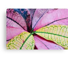 Colorful Abstract Botantical Leaves Canvas Print