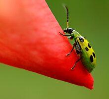Beetle Mania by Brenda Burnett