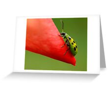 Beetle Mania Greeting Card