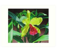 Cattleya orchid - yellow, red and green Art Print