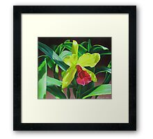 Cattleya orchid - yellow, red and green Framed Print