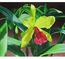 Cattleya orchid - yellow, red and green Photographic Print