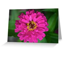 zinnia zen Greeting Card