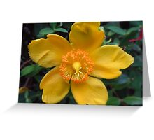 Blooming Yellow Greeting Card