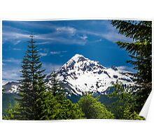 Mount Hood Framed by Fir Trees Poster