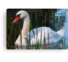 Beautiful Day Beautiful Swan Canvas Print
