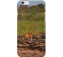 Odocoileus Virginianus - Young Stag | Fire Island, New York iPhone Case/Skin