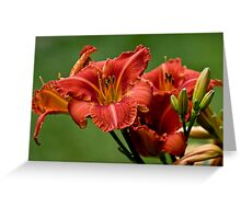 """Daylily """"Raging Wildfire"""" Greeting Card"""