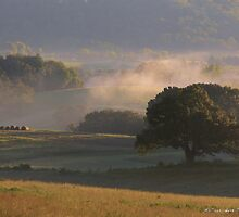 Misty Fog in the Valley by BarbWireNRoses