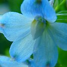 Pretty In Blue by MaeBelle