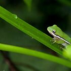 Little Frog by dhmielowski