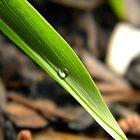 Dew Leaving by joshquag