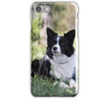 "Beautiful Border Collie.... Alley"""" iPhone Case/Skin"