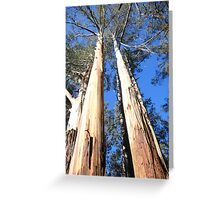 Mountain Ash - Sherbrook Forest  Greeting Card