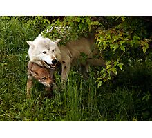 Hiding Wolves Photographic Print