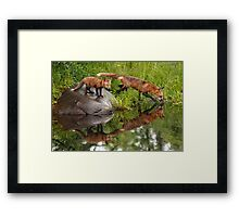 Red Fox Reflections Framed Print