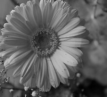 white on grey by Vicki Robinson