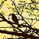 bird. by yeahitsanton