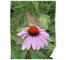 Dead Leaf Butterfly Poster
