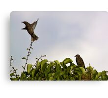 In Flight Canvas Print
