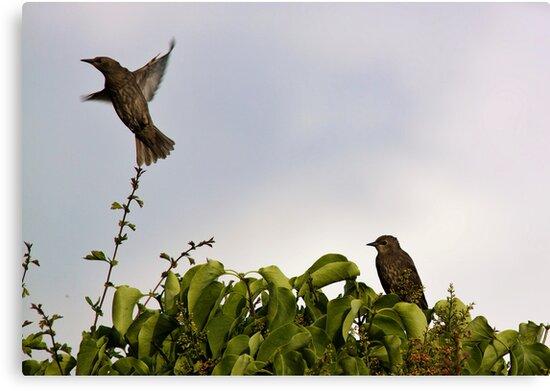 In Flight by Lynne Morris