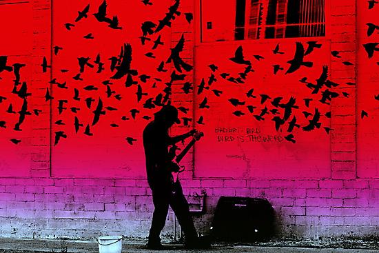 bird is the word by HanselASolera
