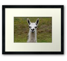 Who are you? Framed Print