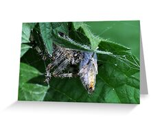 Spider with Wasp in his Web Greeting Card