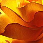 Yellow Rose by Lori Miller