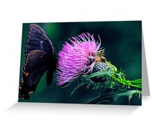Monarch Butterfly on Milk Thistle Greeting Card