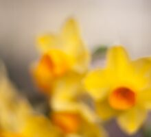 Spring Daffodils by Philip Werner